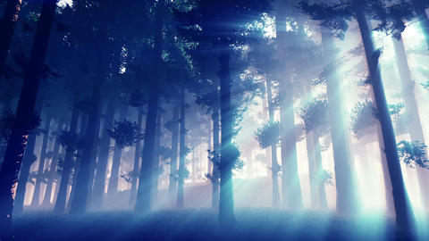 Mysterious Fairy Tale Magic Deep Forest with Lightrays 2 Animation