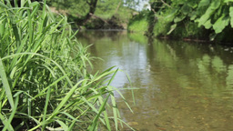 Lowland river flowing slowly beside green forest and stretches of green grass 96 Footage