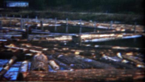 1949: Workers walking around floating logs yard water industrial zone Footage