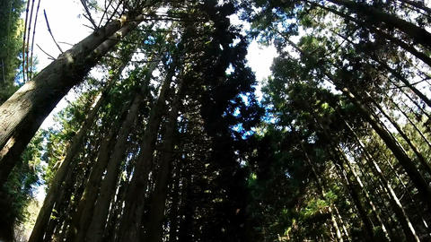 Helmet view. Bike running on a forest of conifers Footage