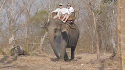 Tourists Ride An Elephant,Tad Lo,Laos stock footage