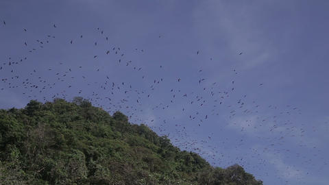 flying foxes on island of Boracay Footage