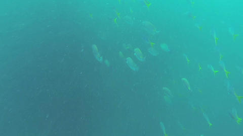 Large Flock Of Sea Fish stock footage