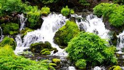 Mt Youtei spring water Hokkaido IMGP2744 Footage
