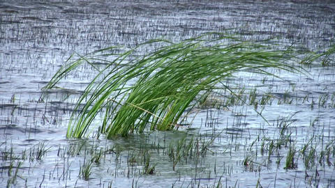 Swamp Wind Footage