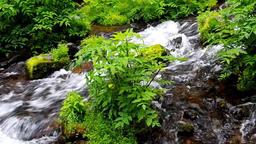 Mt Youtei spring water Hokkaido IMGP2790 Footage