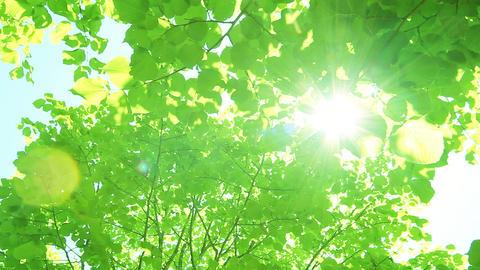 Fresh green 002 ライブ動画