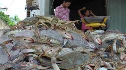 Thailand Ko Samui Island 055 fresh crawfish offered at the coast road Footage