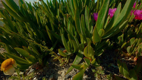 Close-up Shot Showing Exotic Vegetation in a... Stock Video Footage