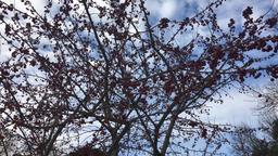 Winter Berries Footage