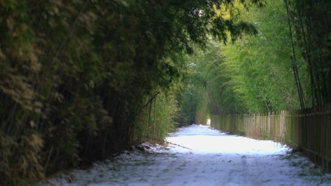 Winter-bamboo1 Footage