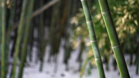 Winter-bamboo7 Footage
