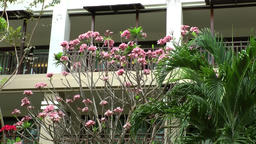 Thailand Pattaya 016 ravindra beach resort, the balconies behind exotic plants Footage