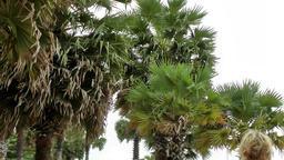 Thailand Pattaya 025 ravindra beach resort, palm treetops and a blonde head Footage