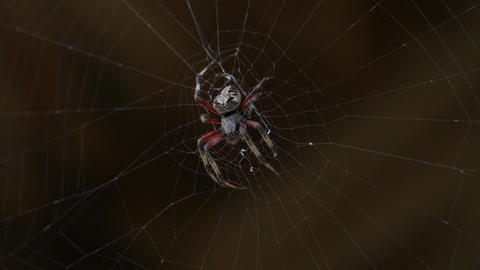 Close-Up of Hairy Spider on Web, 4K Footage