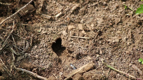 Small ant nest Footage