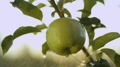 Water Sprays Big Juicy Green Apple against Bright Sun Beam Footage