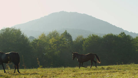 Slow Motion Young Black Horse Runs along Green Field Footage