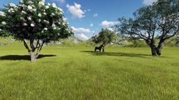 02 spring Animation