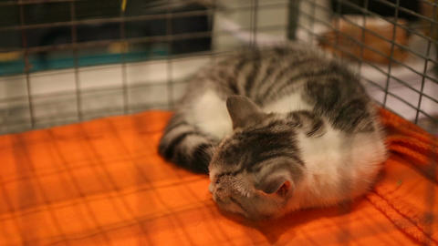 Homeless cat sleeping in iron cage, pet shelter, sad animal waiting for adoption Footage