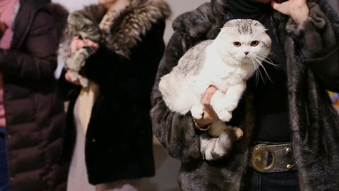Lady in fur coat holding fluffy short-haired cat in hands, pet exhibition Live Action