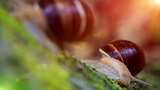 snail closeup in the rays of sun. transfer of focus Footage