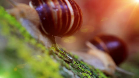 snail closeup in the rays of sun. transfer of focus Stock Video Footage
