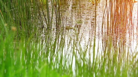 grass in the swamp Stock Video Footage