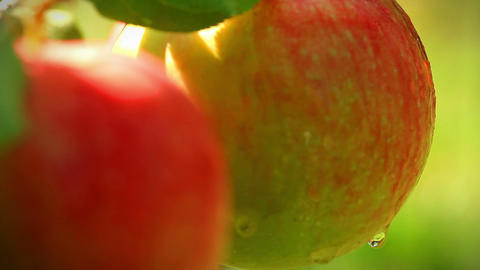 Apples on a branch. shot slider Stock Video Footage