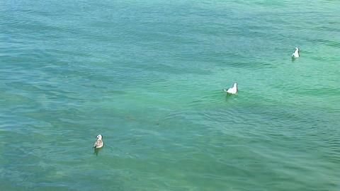 gulls Stock Video Footage
