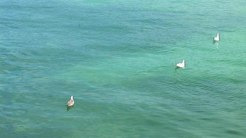 gulls Footage