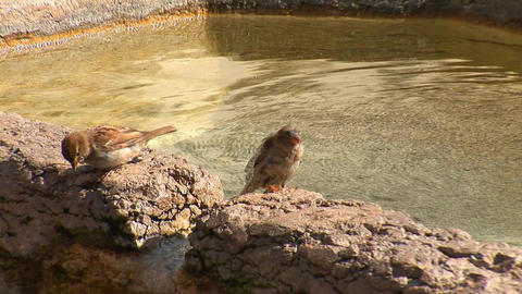 sparrow 1 Footage