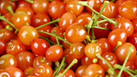 Fresh cherries Stock Video Footage