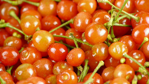 Fresh cherries Stock Video Footage