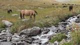 Horses Footage