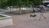 Woman Training Her Dog Footage