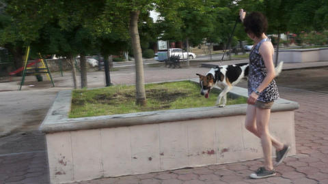 Woman Training Her Dog Stock Video Footage