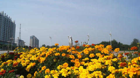 Town of Heihe. Flower bed with yellow flowers Stock Video Footage