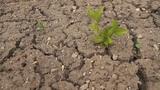 Dry ground Footage