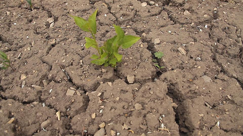Dry ground Stock Video Footage