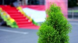 Arborvitae near the stage 1 Footage