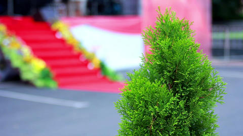 Arborvitae near the stage 1 Stock Video Footage