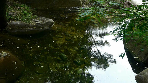 pool water reflection with shadows of trees &... Stock Video Footage