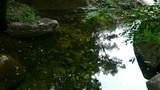 pool water reflection with shadows of trees & sky,Beautiful scenery Footage