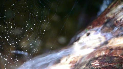spider web cobwebs beside streams water Footage