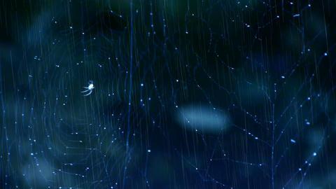 spider web cobwebs beside streams water in rain Stock Video Footage
