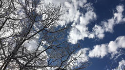 Ice covered tree limbs shaking in the wind against blue sky and clouds Footage