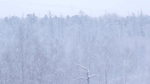 Snowy Thick Forest above Arctic Circle Footage
