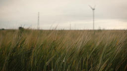 cloudy rural landscape with field full of wheat Footage