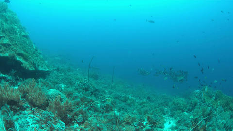 Coral reef with plenty fish 4k Live Action